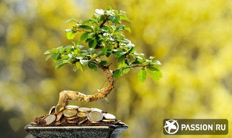 Денежное дерево фен шуй
