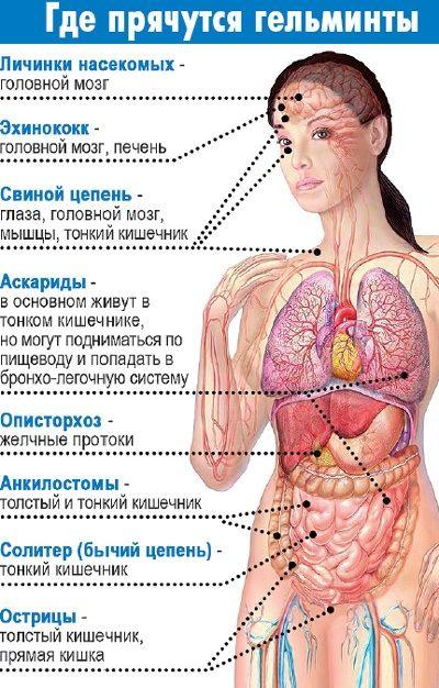 Гельминты у человека симптомы лечение