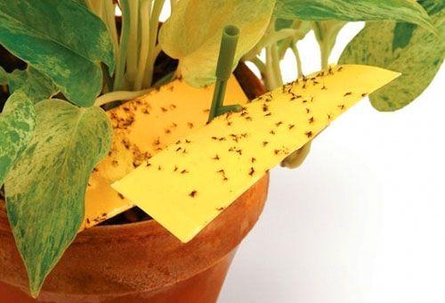 Как избавится от мошек в цветах