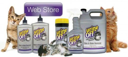 Как избавится от запаха кошачьей мочи