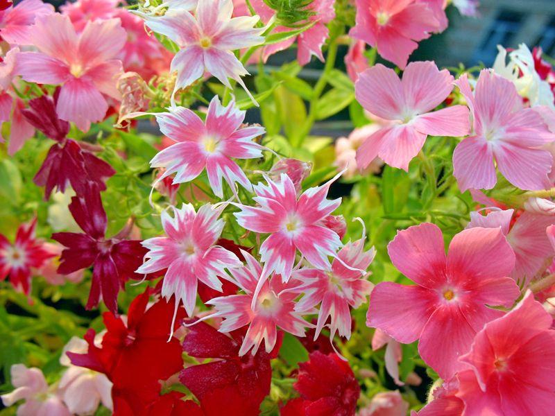 Какие цветы сажают под зиму