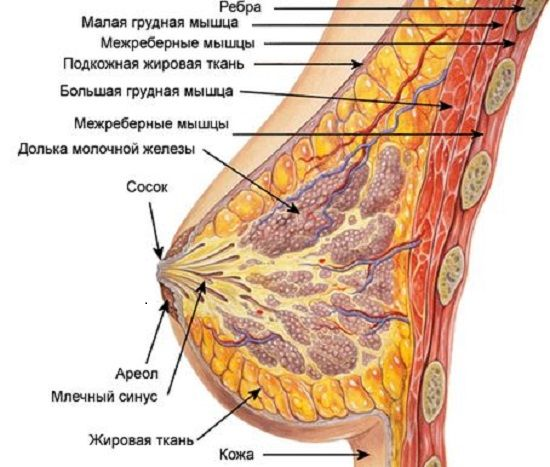 Кистозно фиброзная мастопатия