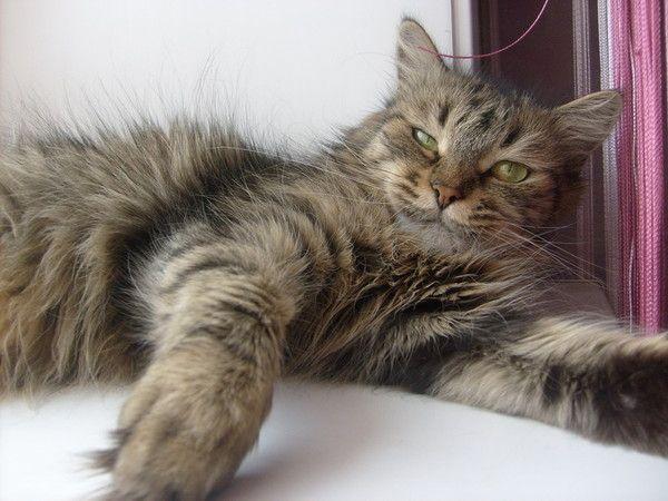 Кот сильно похудел