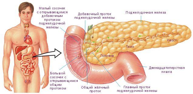 Поджелудочная железа диета