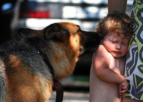 Ребёнка покусала собака