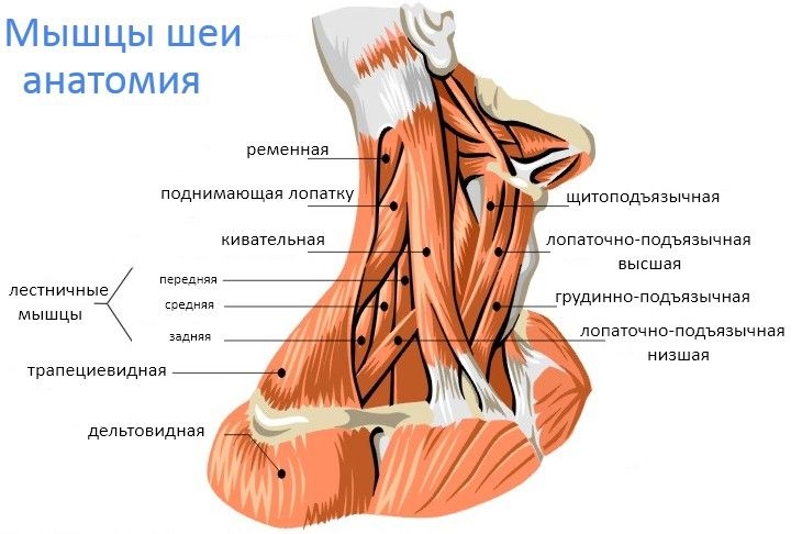Упражнения для мышц шеи