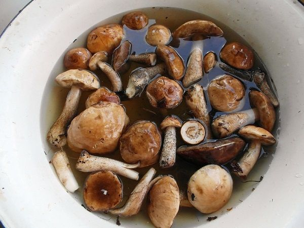 Засолка грибов горячим способом