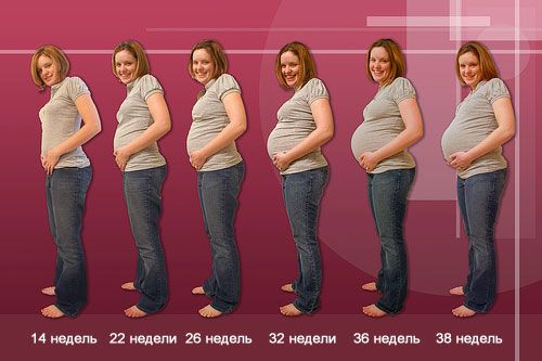 Дата родов по дате зачатия