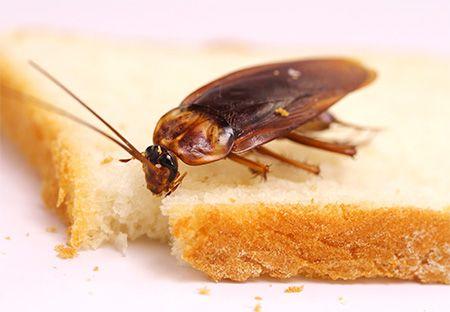 Как избавится от тараканов навсегда