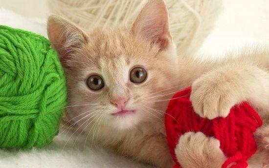 Катозал для кошек инструкция по применению