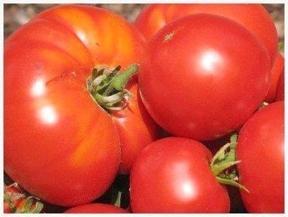 Можно ли кормящей маме помидоры