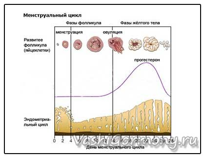 Прогестерон норма у женщин