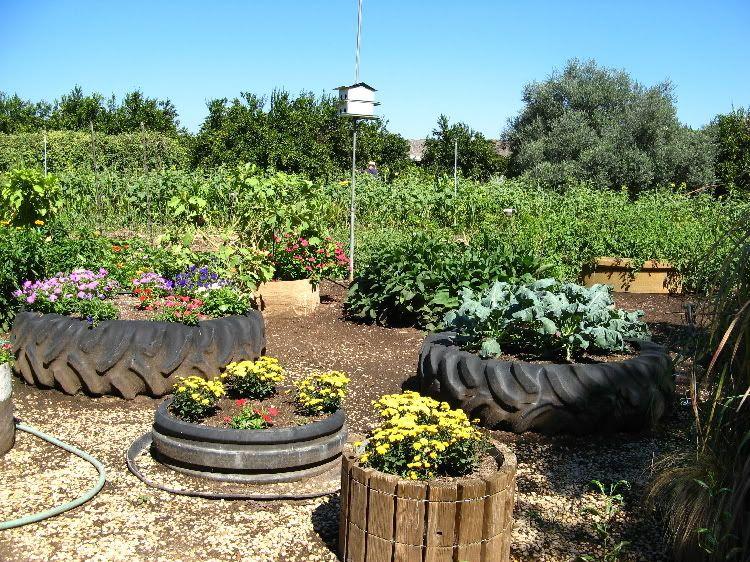сад огород своими руками сидераты